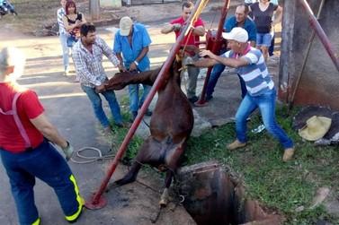 Bombeiros são acionados para resgatar cavalo que caiu em bueiro, em Umuarama
