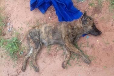 Morte de cadela após suspeita de estupro causa revolta no distrito de Lovat