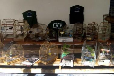 Fiscalização do IAP culmina na apreensão de 34 aves vítimas de maus-tratos
