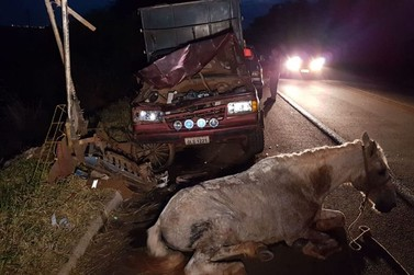Camionete bate em charrete na região de Campo Mourão e cavalo é sacrificado
