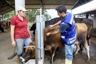 Fim da vacinação contra febre aftosa é discutida com a sociedade, diz governador