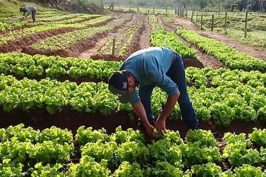 A importância da agricultura familiar no desenvolvimento de Umuarama