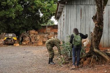 Ação envolve várias forças no combate à dengue na Praça dos Xetá, em Umuarama
