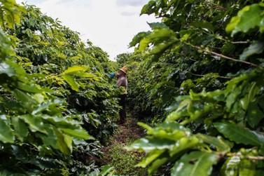 Alerta: produtores devem agilizar proteção do café contra geadas