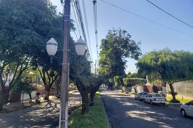Árvores da Avenida Paraná terão poda drástica para recuperação