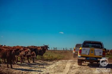 Rally da Pecuária chega ao Paraná e realiza evento técnico em Umuarama