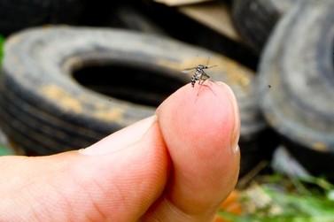 Saúde registra aumento de casos de dengue no Paraná