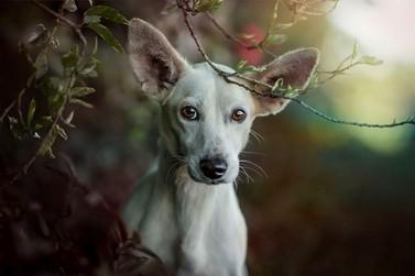 Saau promove feira de doações de animais neste domingo em Umuarama
