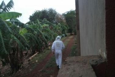 Homem de 63 anos morre ao ser atacado por abelhas na área rural de Palotina