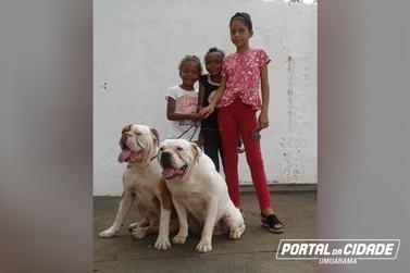 Cães fazem a alegria de crianças que estudam em escola pública de Umuarama