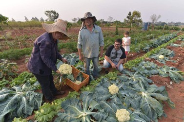 Tecpar certifica a primeira propriedade de produção orgânica de Xambrê