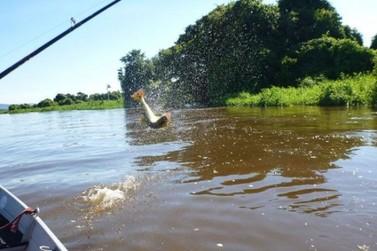 Decisão do TJ-PR suspende resolução que permitia pesca de espécies nativas