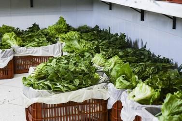 Famílias com insegurança nutricional recebem cestas verdes