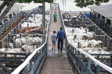 Leilões da Expo Umuarama ofertarão 5.200 animais a partir do próximo sábado
