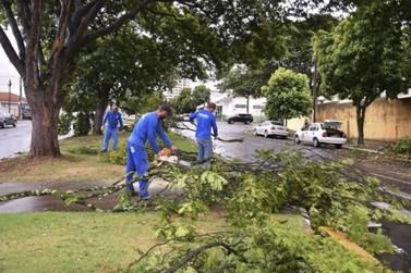 Chuva derruba galhos, árvores e até postes na região central de Umuarama