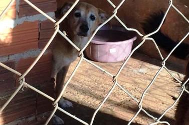 Umuarama solicita ao Governo do Estado apoio para castração de mil cães e gatos