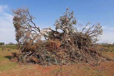 Morador de Umuarama é multado por desmatamento ilegal de 64 hectares no MS