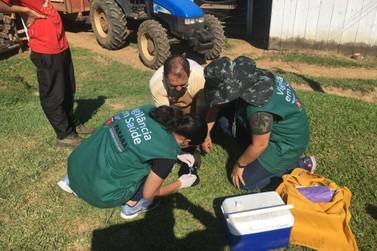 Bloqueio vacinal é realizado após cachorro morrer por raiva silvestre em Pérola