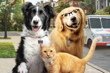 Como Cães e Gatos 3 estreia nesta quinta-feira no Cine Vip em Umuarama