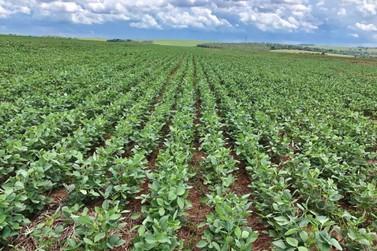 Agricultura: lodo de esgoto beneficia produtores de Umuarama e região