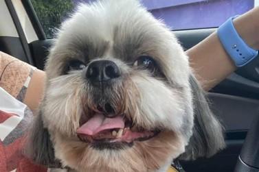 Família faz apelo para encontrar cachorro desaparecido em Umuarama