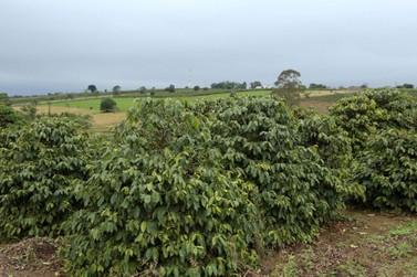 """Atenção: emitido aviso de """"Alerta Geada"""" para toda a cafeicultura regional"""