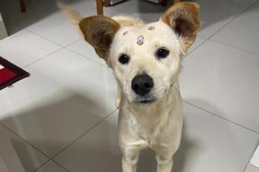 Moradora procura tutor de cachorra que foi recolhida em bairro de Umuarama