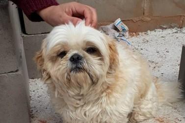 PM recupera cão furtado e prende homens por subtração e receptação em Umuarama