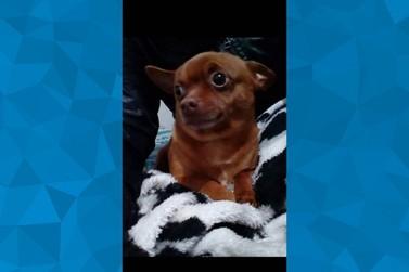 Moradora do Parque Ibirapuera faz apelo para localizar cachorro desaparecido