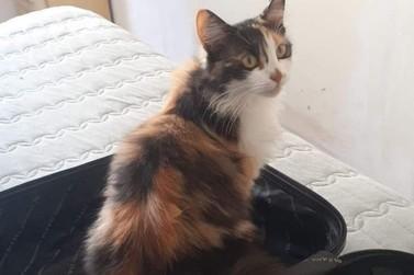 Plena: procura-se gata desaparecida na Rua Paraná, em Cafezal do Sul