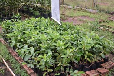 Agricultura de Umuarama distribui mudas frutíferas para produtores rurais