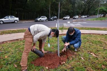 Dia da Árvore terá plantio de espécies nativas em três praças de Umuarama