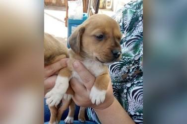 Tutora faz apelo para encontrar cachorrinha desaparecida em Umuarama