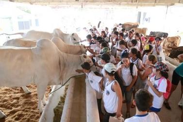 Contato com animais garante o aprendizado e a diversão das crianças na Expo-Umuarama