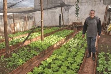 Horta em terreno baldio vira fonte de renda para ex-pedreiro