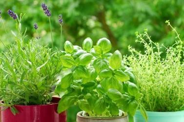 Uso de plantas medicinais nas UBS está em estruturação em Umuarama