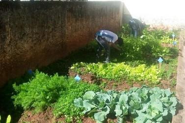 Projeto universitário ensina alunos da rede pública a cultivar hortaliças