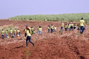 Educação firma parceria com usina e alunos plantam 500 mudas de árvores