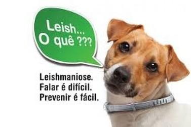 Barra Mansa, RJ, realiza coleta de sangue em cães para exame de leishmaniose