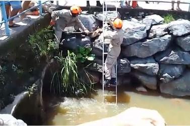Cachorro fica preso entre pedras de córrego em Barra do Piraí