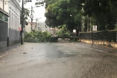 Chuva de verão atinge Valença com registro de queda de árvore