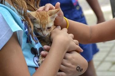Feira de adoção de animais é realizada neste domingo em Resende