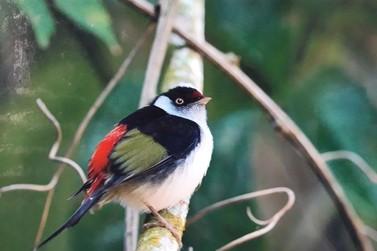 'Parque das Águas… e das Aves Também!' reúne fotografias da fauna de Resende