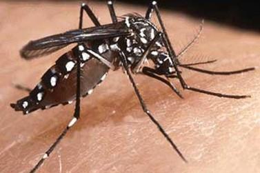 Doenças causadas pelo Aedes Aegypti preocupam moradores de Paraíba do Sul