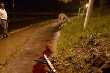 Mula é ferida na rodovia RJ-145, em Valença