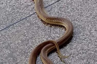 Cobra é encontrada no banheiro feminino da rodoviária de Paty do Alferes