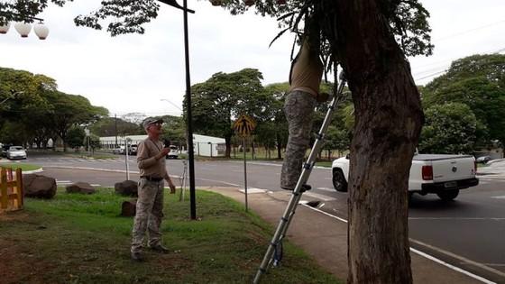 Sem trégua Saúde reforça ações para conter avanço dos casos de dengue em Umuarama 13/11 - ® Portal da Cidade | Umuarama